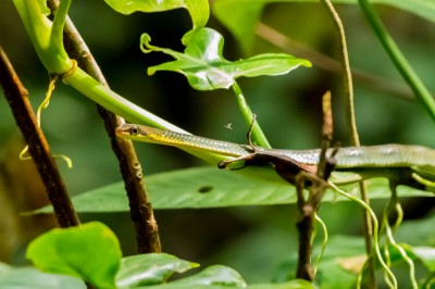 """""""stick snake"""""""